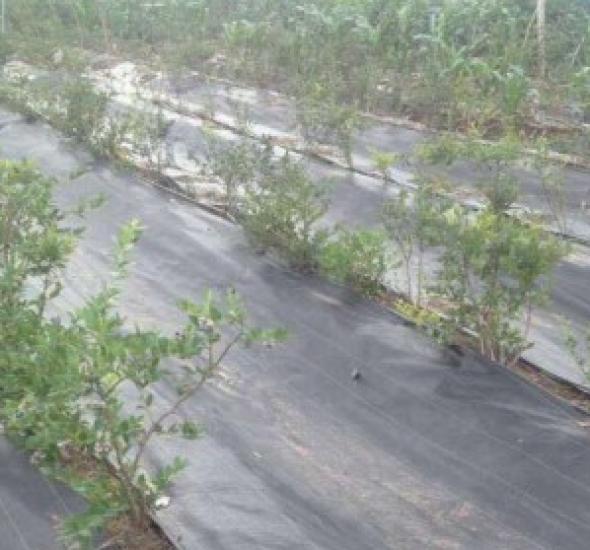 园艺地布与防草布在生产